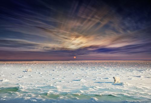 Polar Bears, Churchill, Manitoba - Day to Night